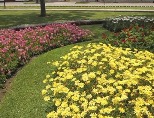 """Nuevo curso """"Actividades auxiliares de jardinería urbana"""", con compromiso de contratación"""