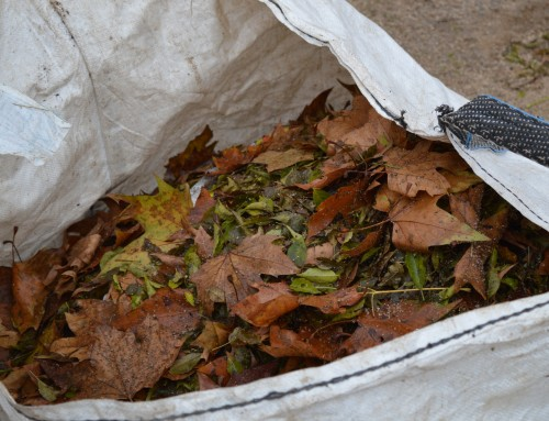 La concejalía de Limpieza Viaria colabora con el medioambiente en la sustitución del plástico por sacas para la recogida de la hoja.