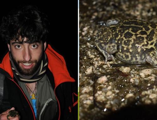 Un investigador y vecino de Humanes de Madrid realiza una investigación sobre la importancia de los anfibios cuyos resultados han sido publicados en una revista internacional.