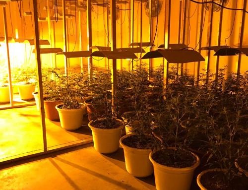 Tres detenidos e intervenidos más de 200 plantas de marihuana en un polígono de Humanes de Madrid